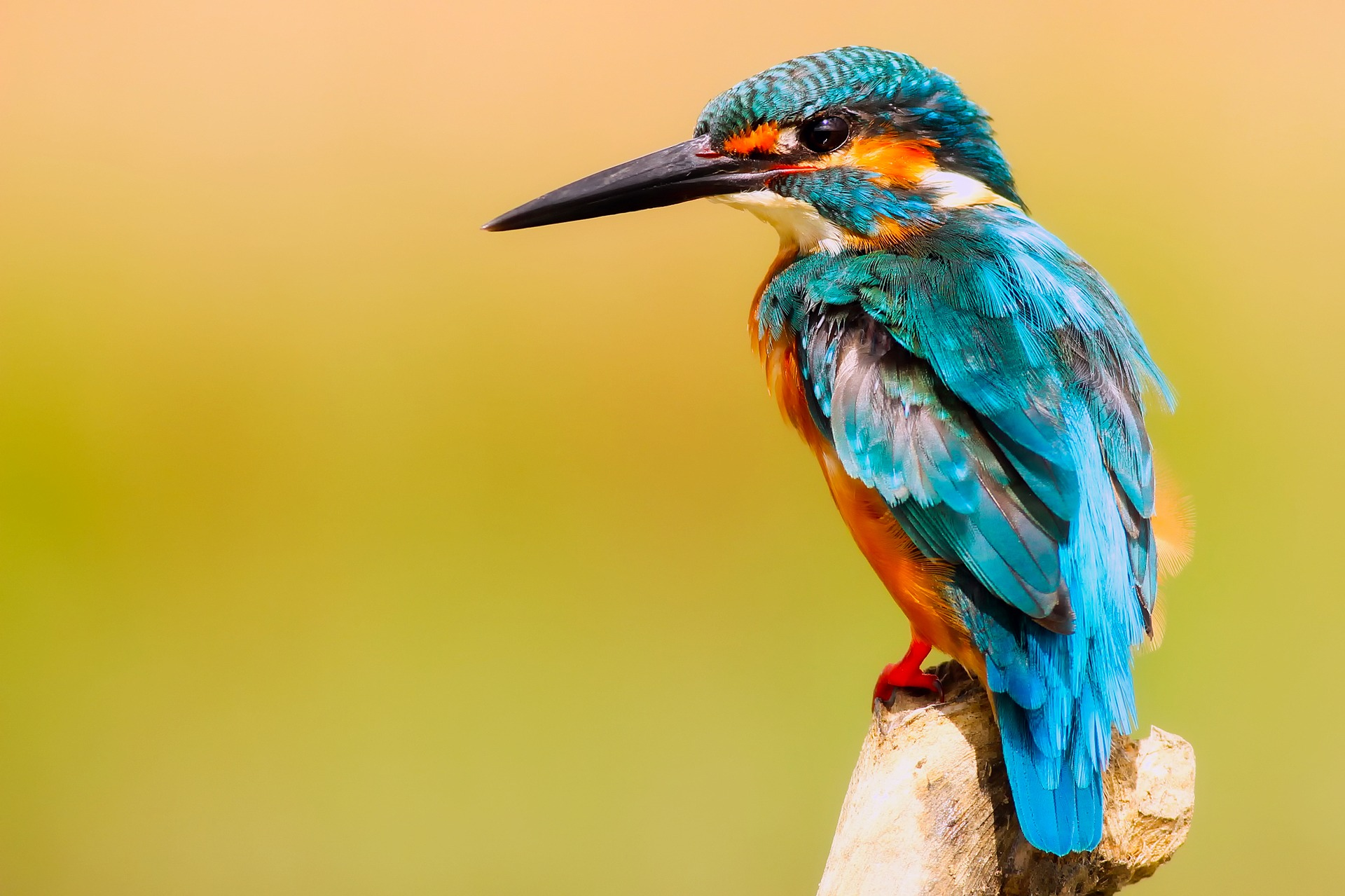 Photograph of a kingfisher